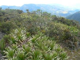 Paramo Plants