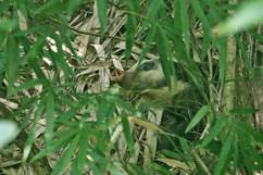 First glimpses of Hog Badger