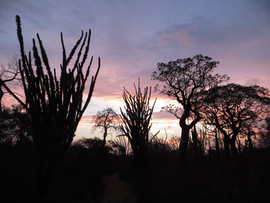 Spiny Forest sunset