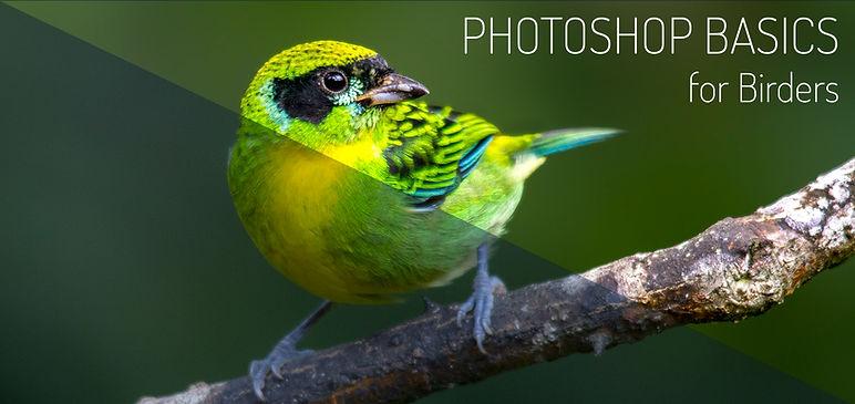 Photoshop for birders banner IMG_2815.jp