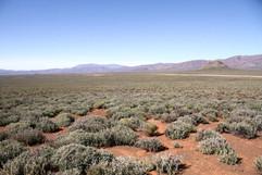 Karoo, the habitat of Rufous-eared Warbler