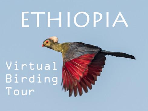 ETHIOPIA Virtual Birding Tour