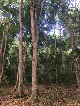 Forest at Bobangira