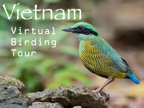 VIETNAM Virtual Birding Tour