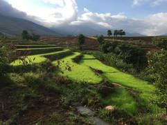 Emerald green rice paddies