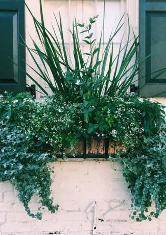 Charleston Green & White