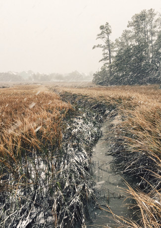 Snow Dusted Sea Grass