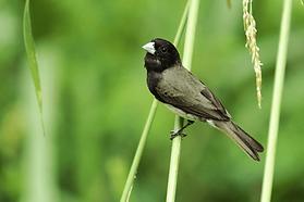 watchimg-bird_big.png