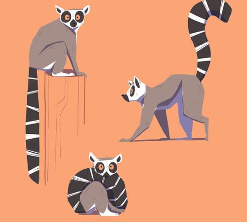 ring tailed lemur.jpg