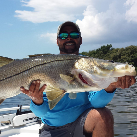 Snook Giants in Tampa Bay