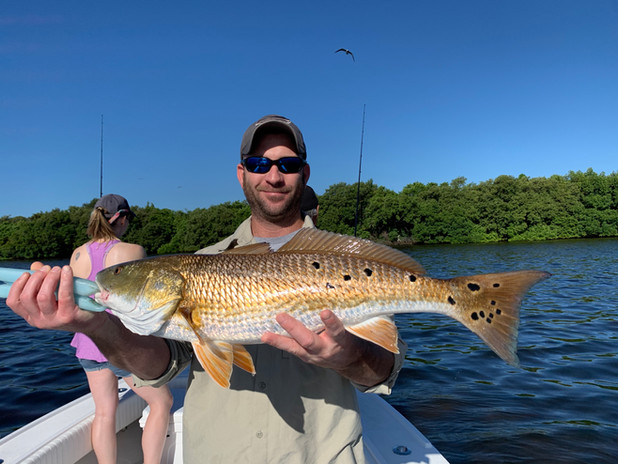 Tampa Bay Red Drum
