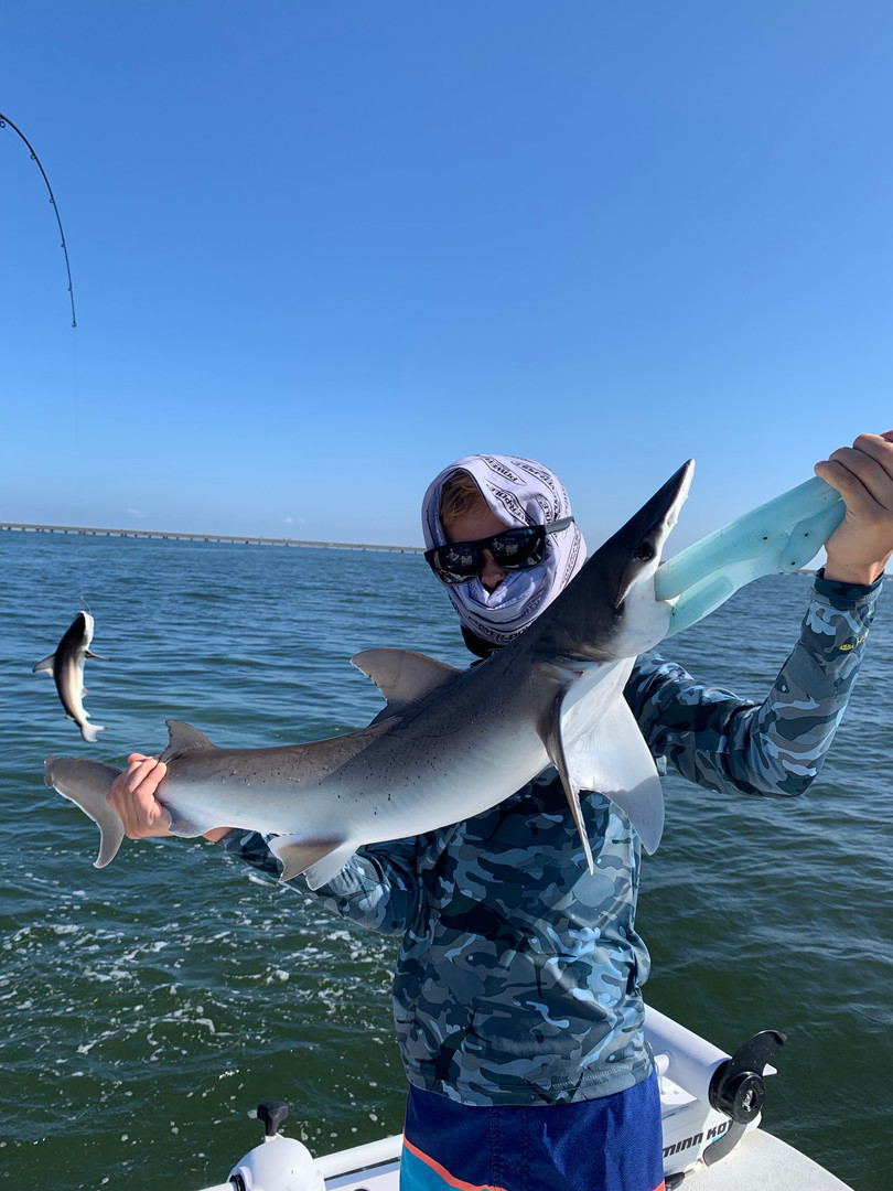 Shark Fishing in Tampa Bay