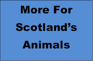 Ask your future MSP to pledge to do More for Scotland's Animals