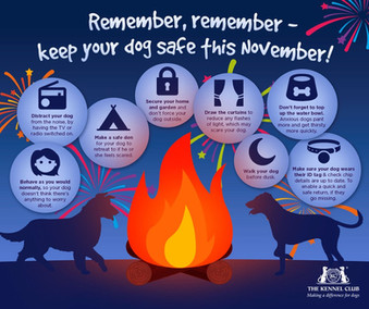 FIREWORKS - useful information for your pets