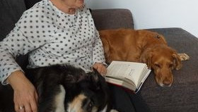 A  Virtual 'Reading With Dogs' session