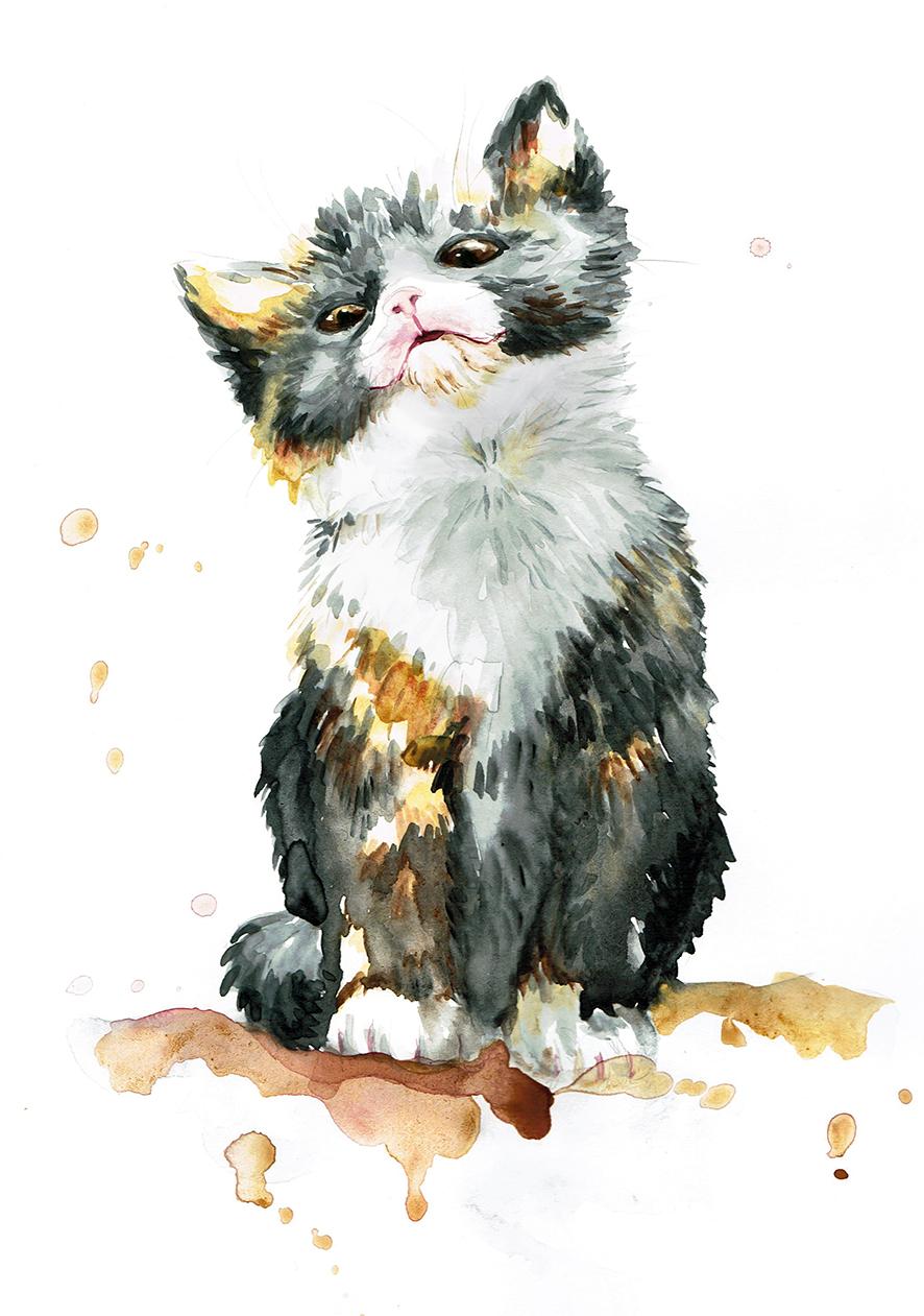Katzi