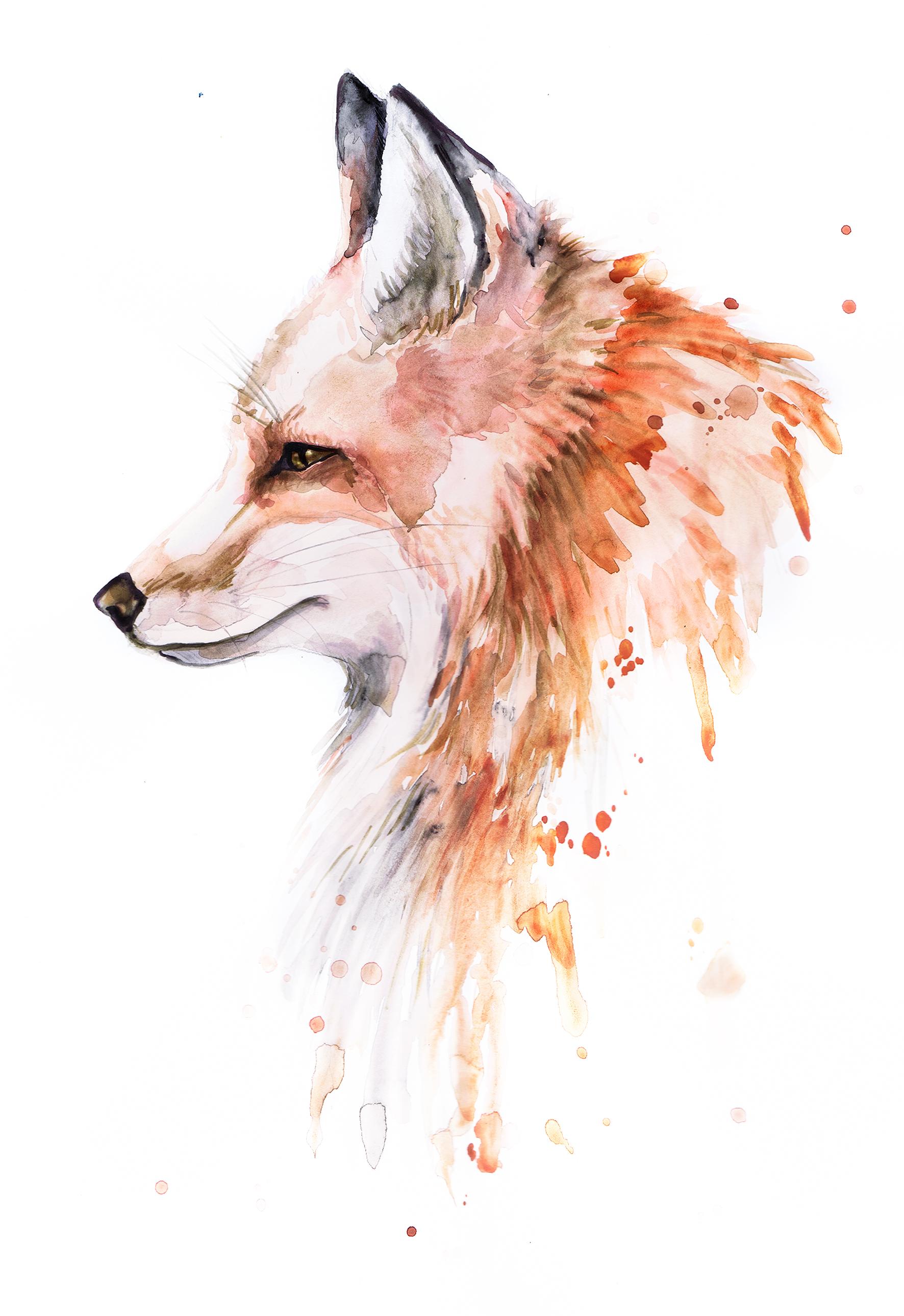 Fuchs2