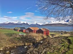 Fjæra i Nordfold
