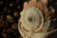 fibonacci-3990275 - Copy.jpg
