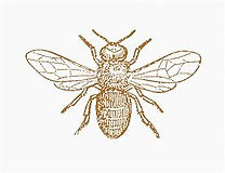 Gold Bee.jpg