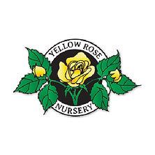 Yellow Rose Nursery