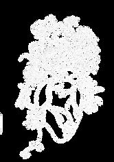 Jill-Wild-new-logo-white-cutout.png