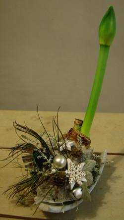 Aangeklede amaryllis met schaal