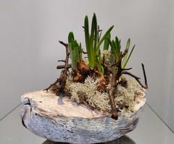 bolletjes-is-kokosbol