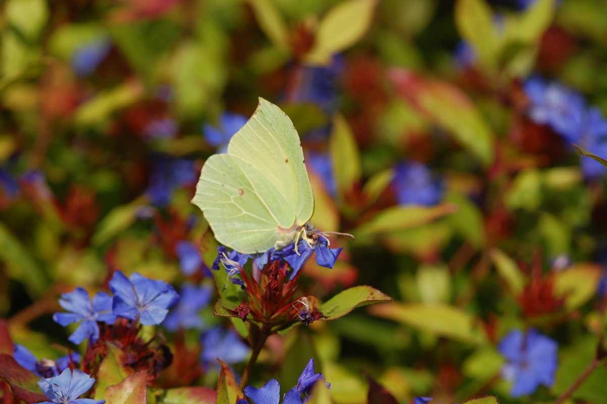 citroentje-met-blauwe-bloemen.jpg