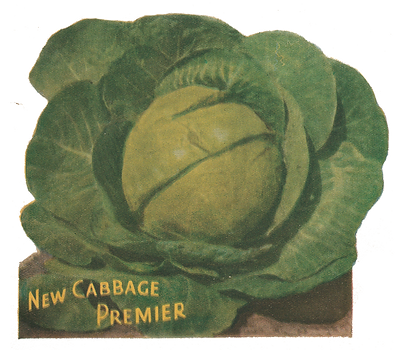 cabbage-7.png