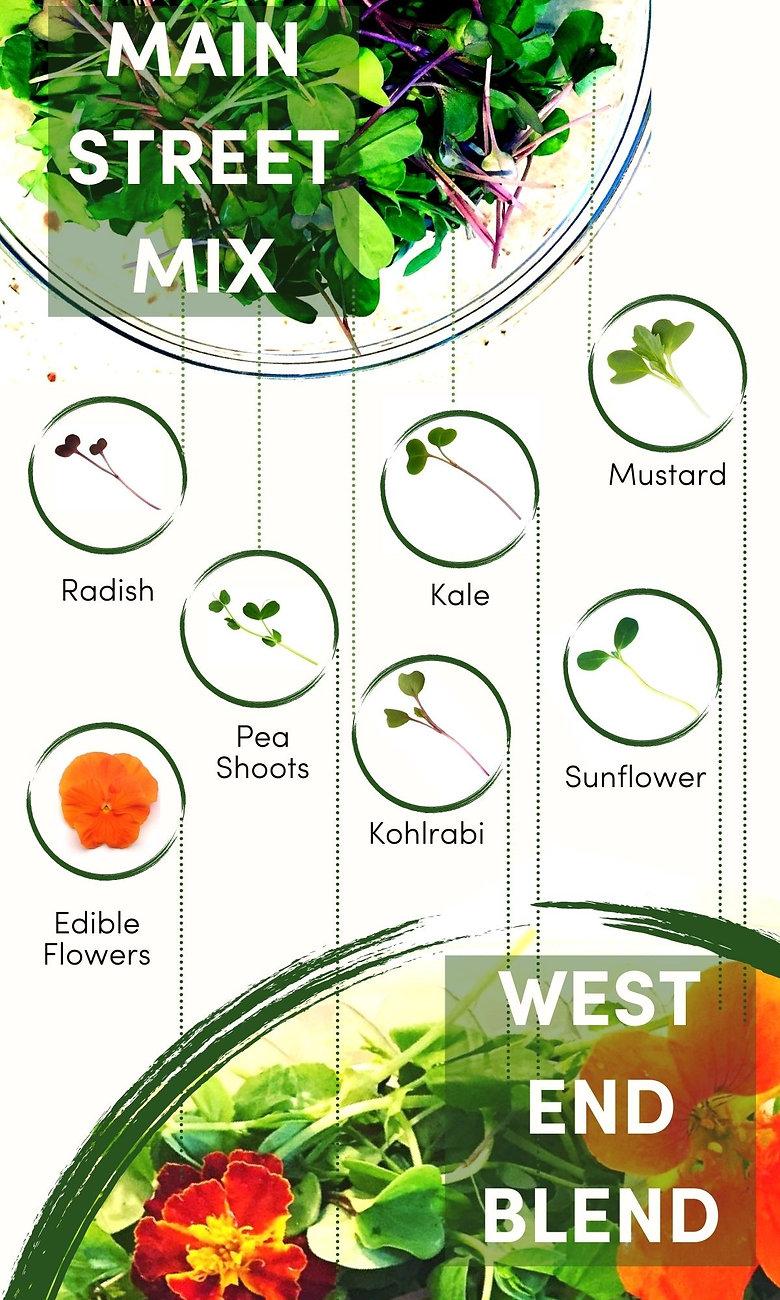 Ingredients Infographic.jpg