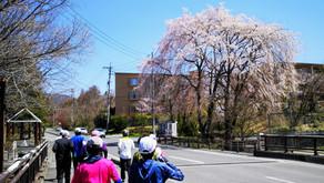 【ランニングサークル】お花見ラン