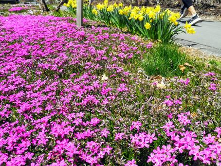 【ランニングサークル】春の訪れ