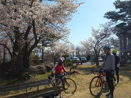 【SCサイクリングクラブ】御牧ケ原台地から戸倉上山田温泉へお花見ツーリング