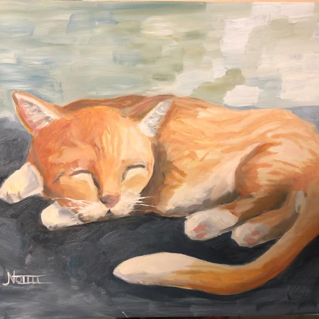 19. Jack Nottle - Cat