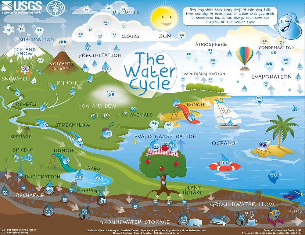 water cycle for kids, what goes in our water comes back around again