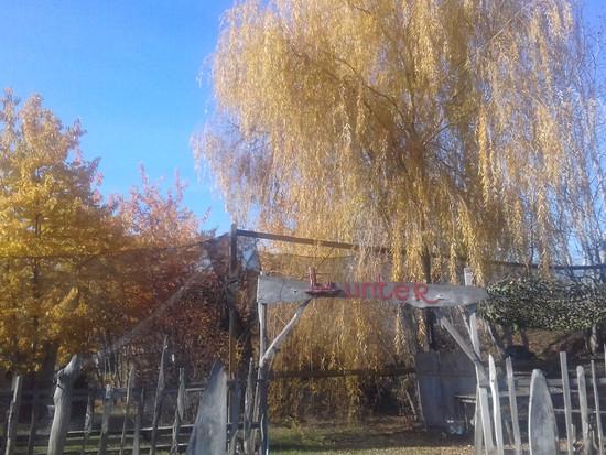 """Осень в парке """"Форест"""""""