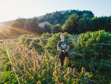 A New State Law Could Allow Small-Scale Outdoor Cannabis Farmers to Adopt the French Wine Concept of