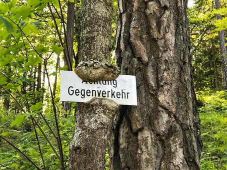 Der Baum und die Krise