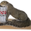 Thumbnail: Taxidermy Drunk Squirrel