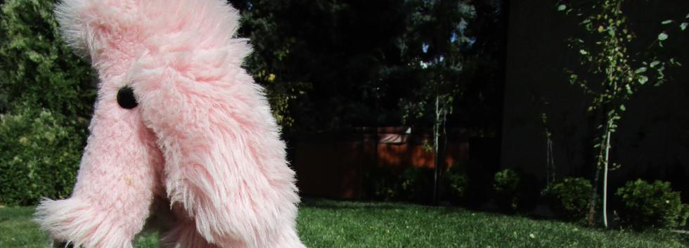 Pink Poodle Step Stool