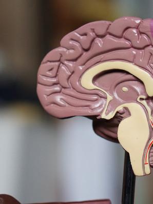 A craniosacral approach to temporal lobe epilepsy