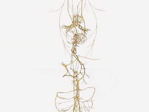 Inflammation and the Vagus Nerve