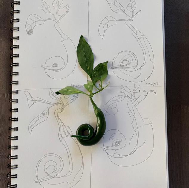 April 20 Chilli Sketch MS.jpeg