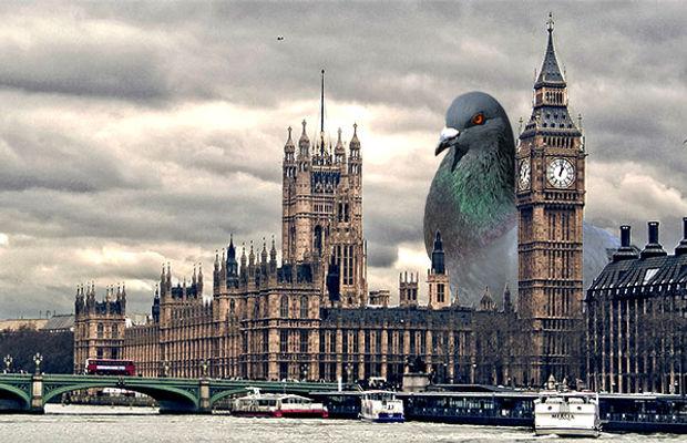 Le pigeon géant à Londres