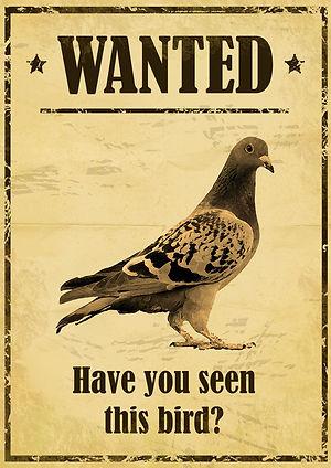 Wanted el pigeon
