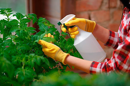 Insecticida-para-plantas.jpg