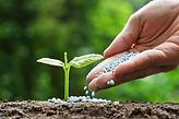 outlook-for-the-global-fertilizer-market