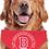 Thumbnail: Crest Doggie Bandanna