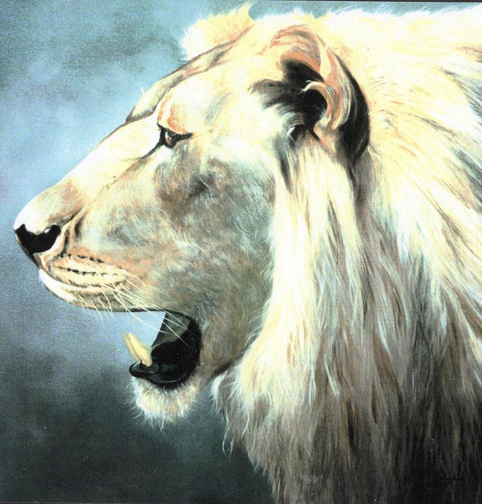 Wildlife Paintings, Broward and Palm Beach counties